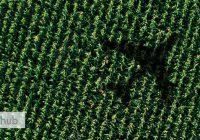 Гибридизация растений
